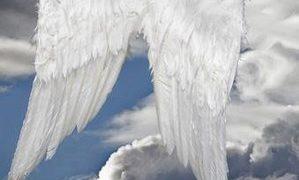 ANGELI, barriere piumate dell'esistenza!